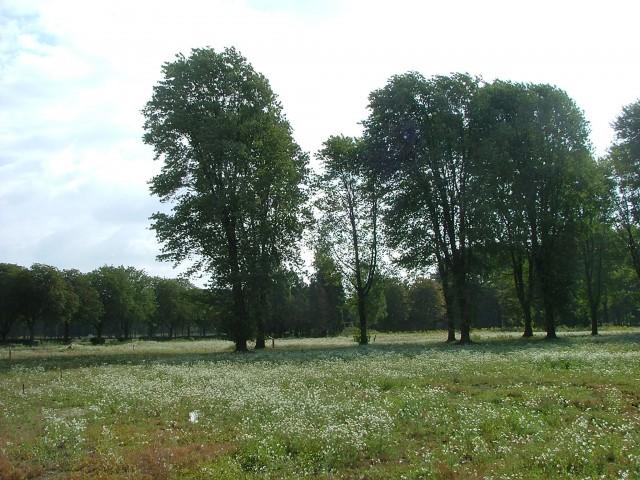 Bosrijk foto